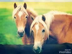 Schöne Pferde Bilder - pferde bilder
