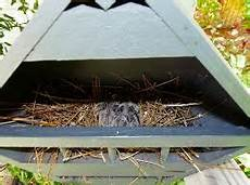 mourning dove house plans mourning dove birdhouse google search bird house bird