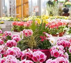 fiori vendita piante e fiori vendita piante e fiori garden a villorba