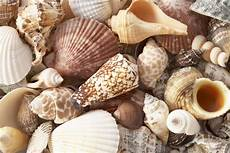 basteln mit muscheln different things to make with seashells ehow