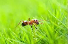 ameisen im garten gravierender r 252 ckgang der ameisen liga vogelschutz