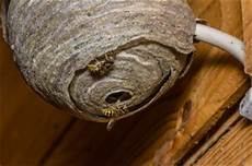 wespennest was tun tipps im folgenden guide