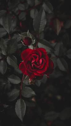 iphone x flower wallpaper hd iphone x wallpaper notitle 558657528774118663 iphone x
