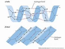 dna biology and bioinformatics c