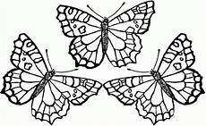butterfly coloring pages for adults coloring home