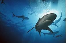 Informasi Cocok Ikan Hiu Adalah Buta Warna