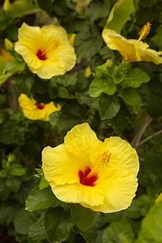 Plants Ruining Your Yard