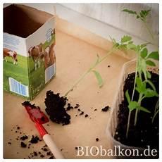 tomatenpflanzen aufziehen biobalkon de