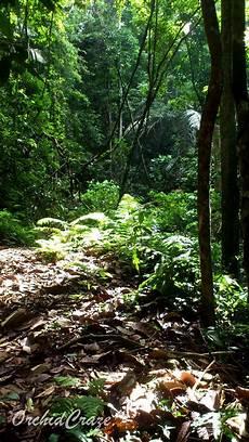 Orchidcraze Jalan Jalan Jumpa Orkid Hutan Lipur Bukit Hijau