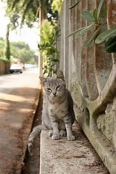 Conni Malvorlagen Kostenlos Rom Mietze In Rom Foto Bild Tiere Haustiere Katzen