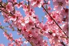 sfondi fiore pollicina s cupboard is at abilmente