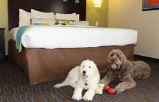 which are the most pet friendly u s hotel chains and which ones just claim they are frommer s