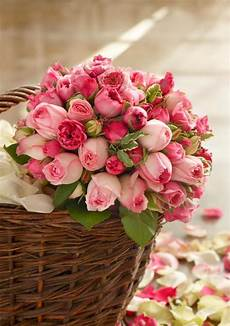 Gambarbaru Gambar Bunga Mekar Warna Warni