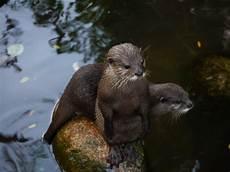 Gambar Margasatwa Binatang Menyusui Fauna Keluarga