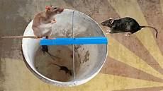 rat trap in cambodia