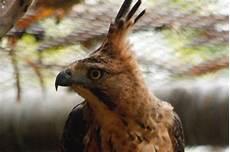 Wow 24 Gambar Burung Garuda Asli Richa Gambar