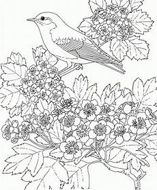 free printable coloring page missouri state bird and