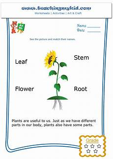 kindergarten learning match the parts of a plant