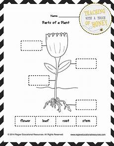 free plant worksheets 2nd grade 13733 classroom freebies freebie label the plant tiered templates