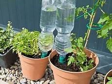 pflanzen während urlaub bewässern 6 x wasser spender pflanzen bew 196 sserung pet flaschen