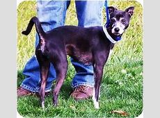 Spare   Adopted Dog   Spare   mixed breed   Toronto