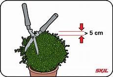 buchsbaum schneiden wann am besten buchsb 228 ume schneiden