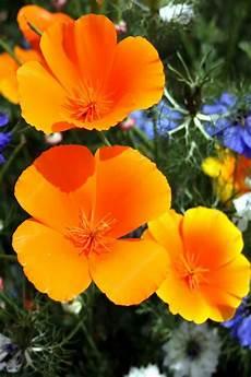 Orange Flowers Iphone Wallpaper by Orange Flowers Iphone Wallpaper Iphone Wallpapers