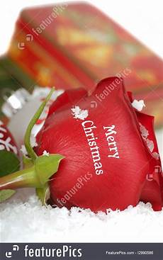 rose that says merry christmas it photo