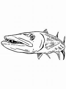 malvorlagen fische hecht tiffanylovesbooks
