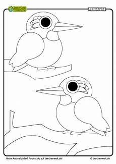 Malvorlagen Fische Rekorde Malvorlage Eisvogel