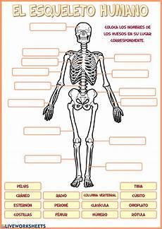 science worksheets human skeleton 12216 el esqueleto humano ficha interactiva