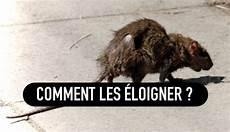 L Astuce Pour 233 Loigner Les Rats Et Souris De Chez Vous