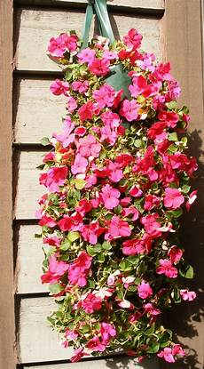 Top 10 Plants For Stunning Hanging Baskets Top Inspired