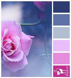 rose mist blue pink pastel designcat colour inspiration board colors color schemes