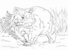 gemeiner wombat ausmalbild malvorlagen tiere