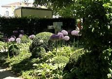 laga 2010 landesgartenschau aschersleben 301 buchsbaum