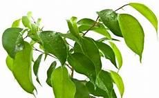 giftige zimmerpflanzen baby giftige und ungiftige zimmerpflanzen und pflanzen