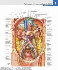 Gambar Bagian Tubuh Manusia Sumber Informasi