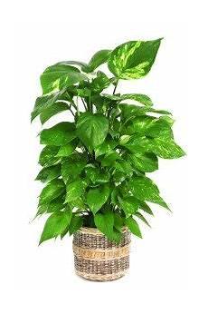 luftreinigende pflanzen fürs schlafzimmer 12 of the best plants for cleaner indoor air