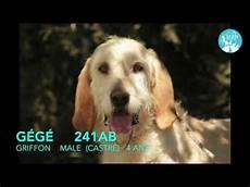 Spa De Bergerac Chien A Adopter Adopt A Gy G 233 G 233