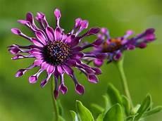 fiori per terrazzi al sole fiori resistenti al sole da coltivare in pieno sole il verde