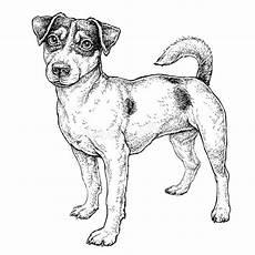 terrier stock illustrations 1 105