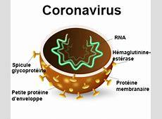 coronavirus incubation period human