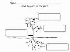 parts of plants kindergarten worksheets 13581 ms lilypad s primary pond
