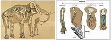 100 Gambar Anatomi Gajah Terbaik Infobaru