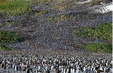 Usang Ya Allah Apabila 200 000 Penguin Mencari