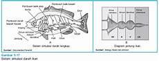 The Other Story Sistem Peredaran Darah Tertutup Pisces