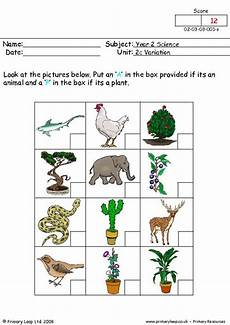 plants worksheets for primary 13486 year 2 science printable resources free worksheets for primaryleap co uk