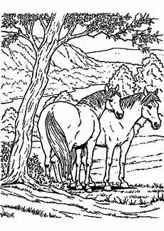 20 besten pferde ausmalbilder zum ausdrucken beste
