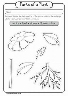 parts of plants worksheets for grade 1 13695 of part seed plant diagram caps grade1 lifeskills term3 plants seeds parts of a plant what i